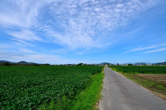 近江八幡市のうろこ雲